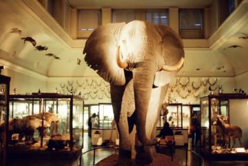 Naturhistoriska museet förväntas öppna igen i april